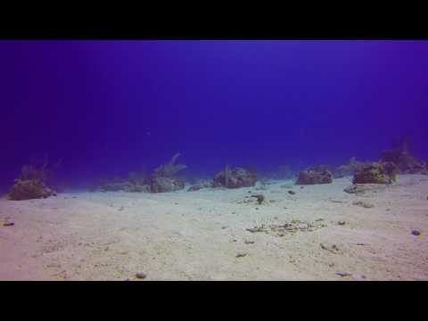Turks & Caicos - Diving - Jaw Fish (2016-11)