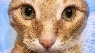 ZOMBIE CAT/BEST FUNNY CAT VIDEO/ЗОМБИ КОТ ТИМА/ЛУЧШИЕ ПРИКОЛЫ ЗА НЕДЕЛЮ/ 96 猫 / 僵尸猫/ZOMBIE KATZE