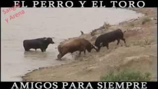El Perro y El Toro, Amigos Para Siempre