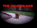 LINDA THE TALKING DOG