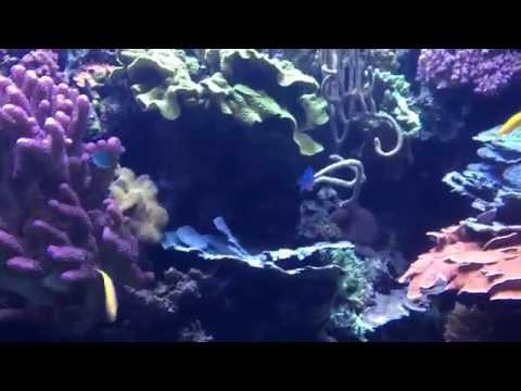 Aquarium of Pacific 023 Tropical Pacific 23 April 2015