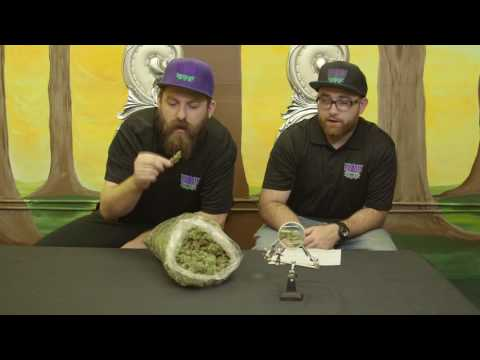 High Times Winner: F1 Durban Weed Strain Review - YouTube