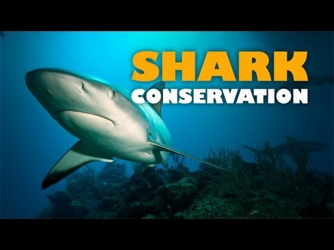 Shark Conservation: Safeguarding the Future of Our Ocean