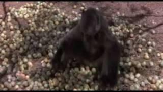 drunk animals - حيوانات سكرانه