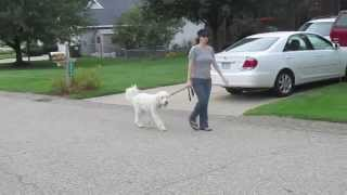 Lisa And Ian Walking | Follow The Leader Dog Training And Rehabilitation Llc