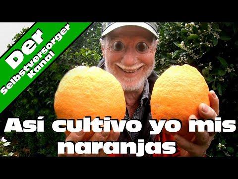 Así cultivo yo mis naranjas en idioma español
