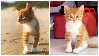 Growing up with MARLIN :) Episode 1.  Our ocean-loving, swimming, boat-riding, orange tabby CAT-DOG!