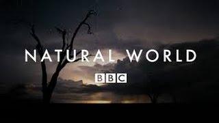 BBC Мир Природы Горные вершины Шотландии