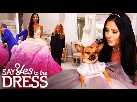 The Dog Has to Look as Good in the Dress as the Bride | Say Yes To The Dress. http://bit.ly/2JHxj9e