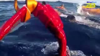 Se elevan a seis los desaparecidos en el mar que viajaban a bordo de una patera