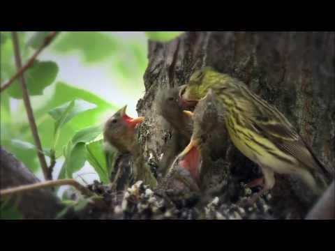Les bébés animaux - Nat Geo Wild