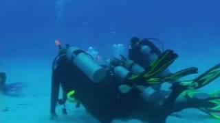Bull sharks dive in Playa del Carmen
