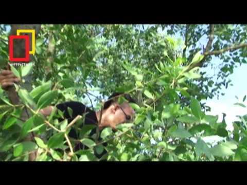 SVN 2012 BH Khám phá rừng ngập mặn