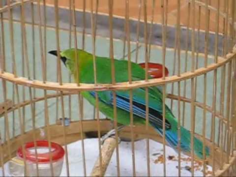 chim hỏa tiển 2