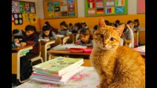 STRAY CAT WANDERS INTO THIRD GRADE CLASSROOM AND DECIDES TO BECOME A STUDENT