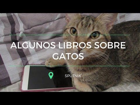 Libros sobre gatos y gatos   Sputnik