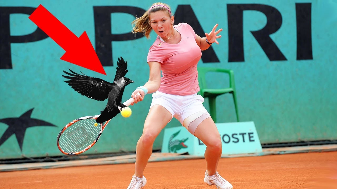 10 EPIC MOMENTS WITH ANIMALS IN SPORTS