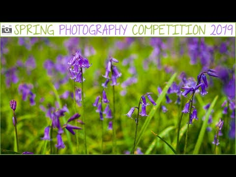 Our Spring Photography Competition