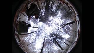 Langzeit-Zeitraffer im Wald, jeden Tag ein Bild