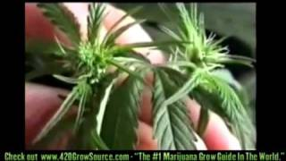 how to grow weed for dummies 1 playlist