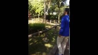 Vlog daily holiday di lembah hijau part2