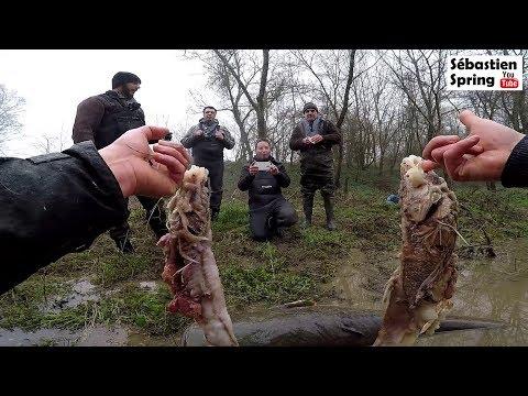 Le silure de Châteauroux avait BIEN mangé!