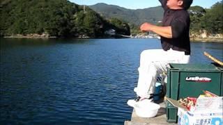 チヌかかり釣り 「TETSUOの釣行記」阿曽浦「さくら」 2011 11 16