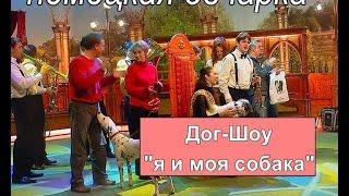 """Немецкая овчарка в программе """"Дог - шоу я и моя собака""""."""