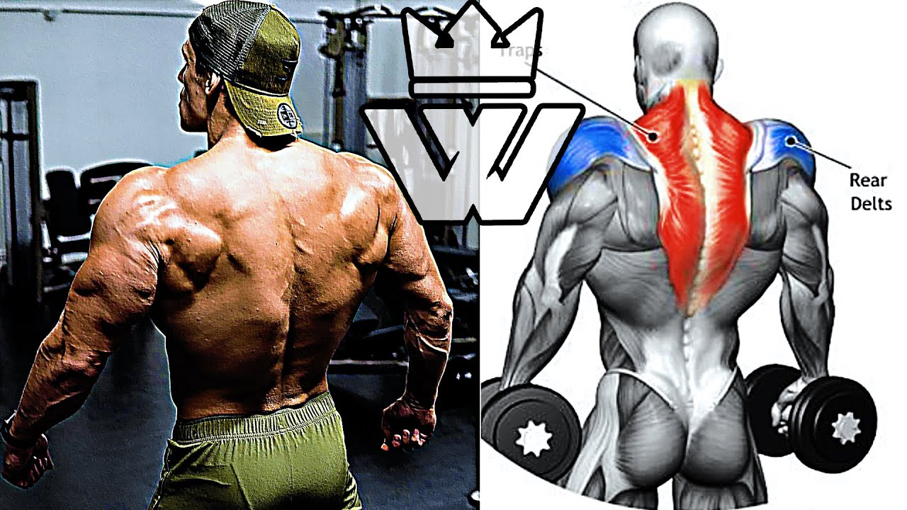 HOW TO BUILD A BIG SHOULDERS and BACK