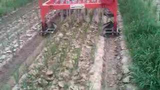 System of Rice Intensification: Precision Weeder Demonstration Farm in Pakistan