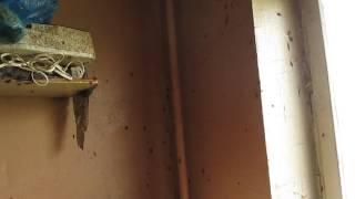 видео уничтожение тараканов в Москве