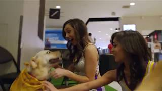 Harlow & Pierre: Laker Dogs For A Day | #TeamUCLALakers