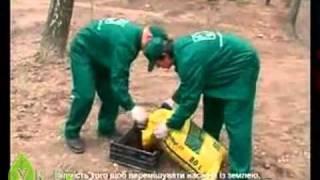видео Как садить газонную траву семенами: секреты и тонкости посадки
