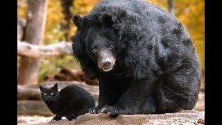 A Massive Bear Sneaks Up On A Tiny House Cat, Seconds Later I Can't Believe My Eyes