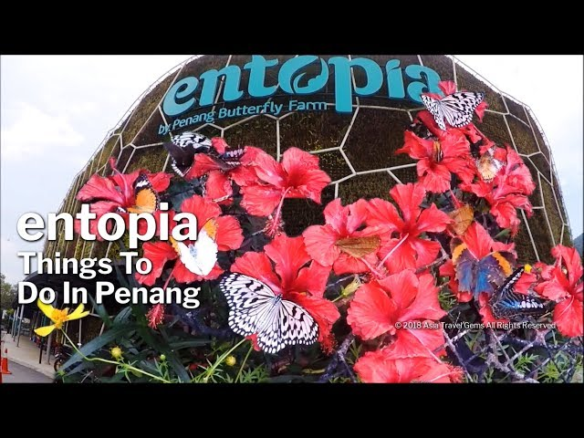 Things To Do In Penang - Entopia Butterfly Farm
