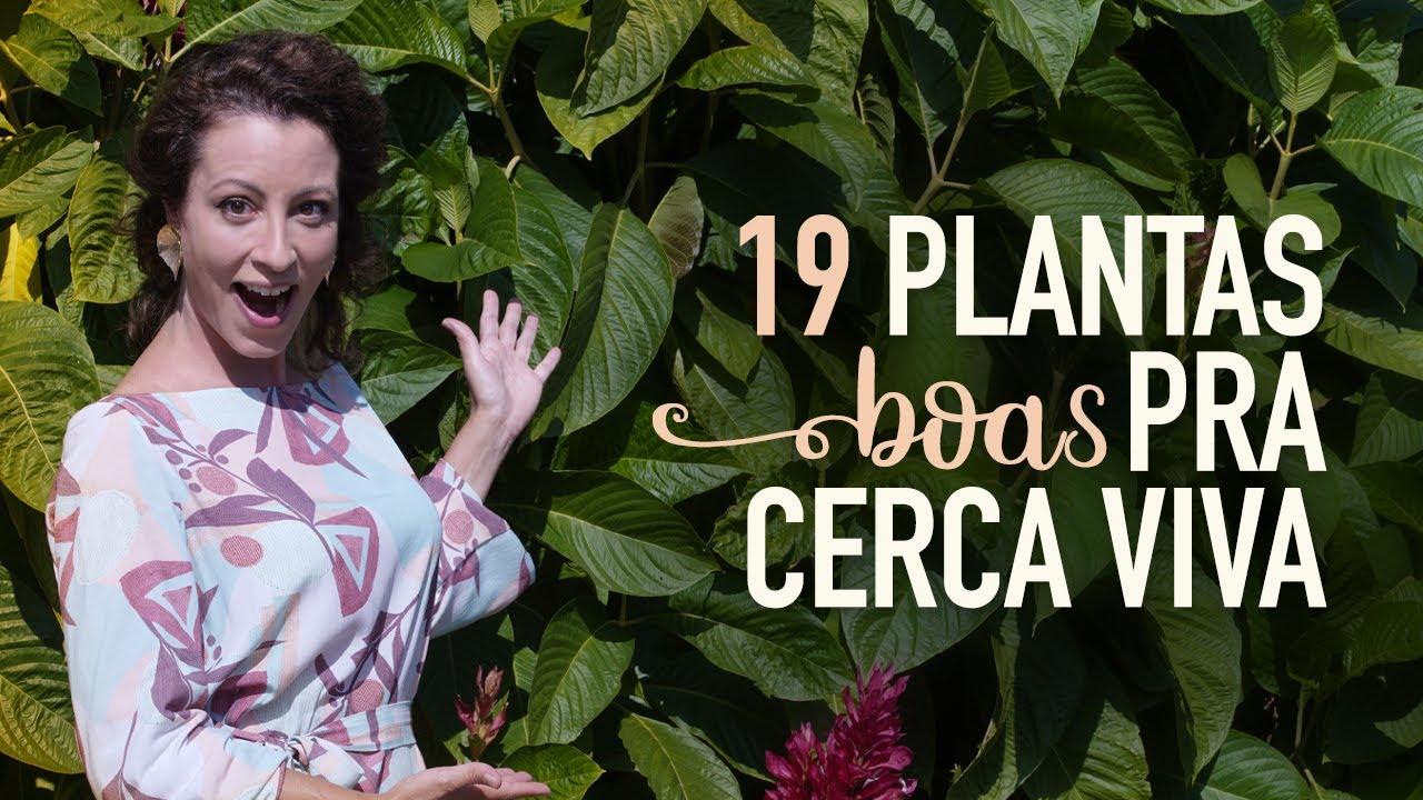 Jardineira Carol Costa confere dica de 19 plantas para Cercas Vivas