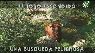 Toro semental escondido entre la maleza | Toros desde Andalucía