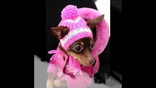 шапки для собак интернет магазин