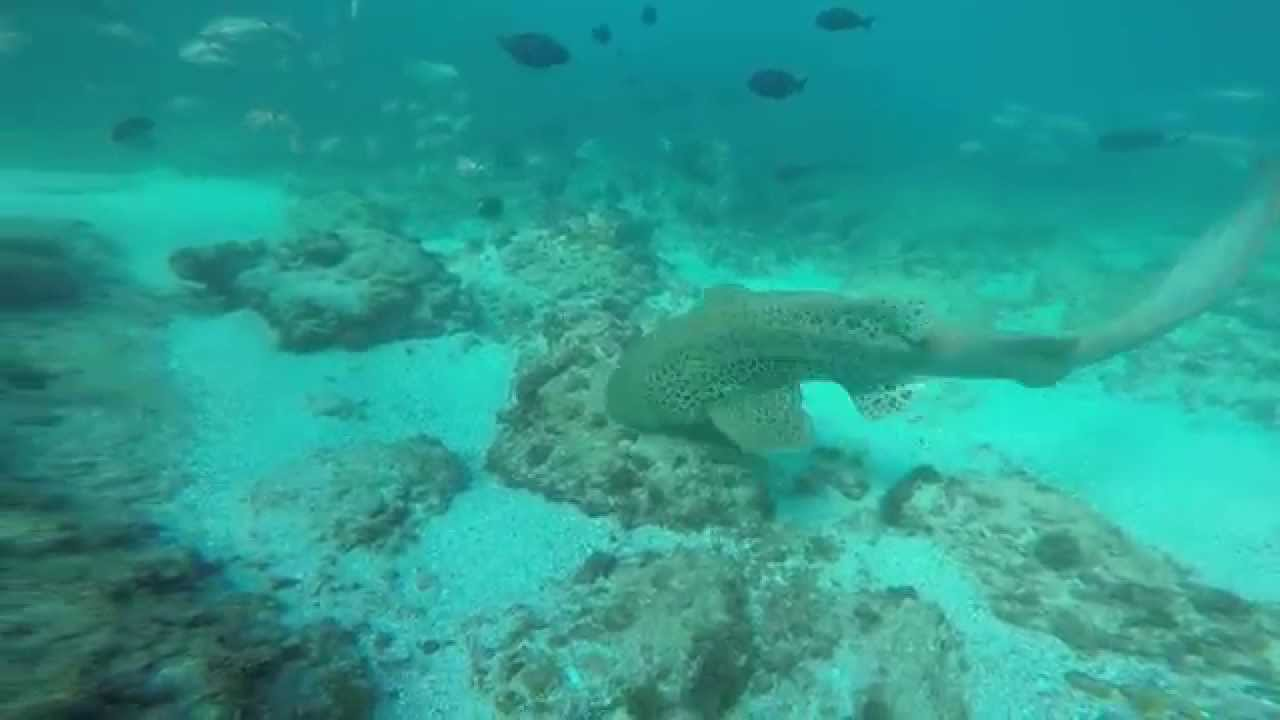 Snorkeling byronbay julian rocks march2015 youtube - Dive byron bay ...