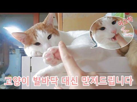 고양이 발바닥 대신 만져드립니다 touching cat paw