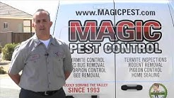 East Valley Pest Control | Pest Control | Magic Pest Control Call 480-654-5888