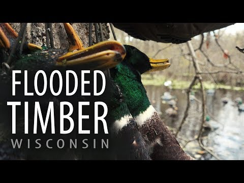 Rare Wisconsin FLOODED Timber | Tiny Hole | Mississippi River Duck Hunt