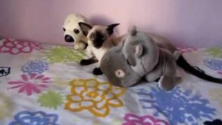 Сиамская кошка Dizigner Pechen'ka 5 месяцев
