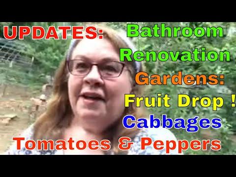Live Update 2: Bathroom Renovation, Gardens, Fruit Drop, Veggies!
