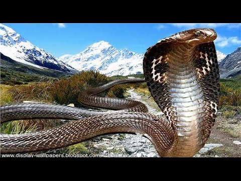 Documentaries discovery channel animals Snakes and the Surpr