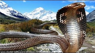 Documentaries discovery channel animals Snakes and the Surprise Secrets animal planet docu