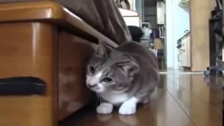 Нарезки ведио с кошками, смешные кошки, сборник приколов с котом,