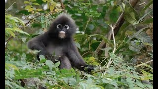 Expedition Malaysia: A Top-to-Bottom Rainforest Survey | California Academy of Sciences