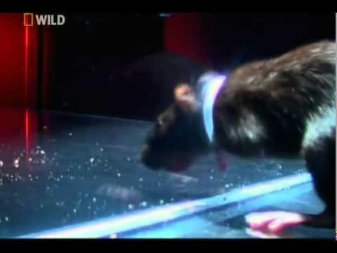 Klozetten fare çıkabilir mi?