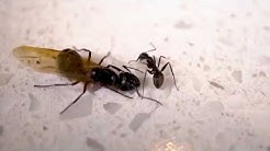 Carpenter Ant Treatment: Removal & Control